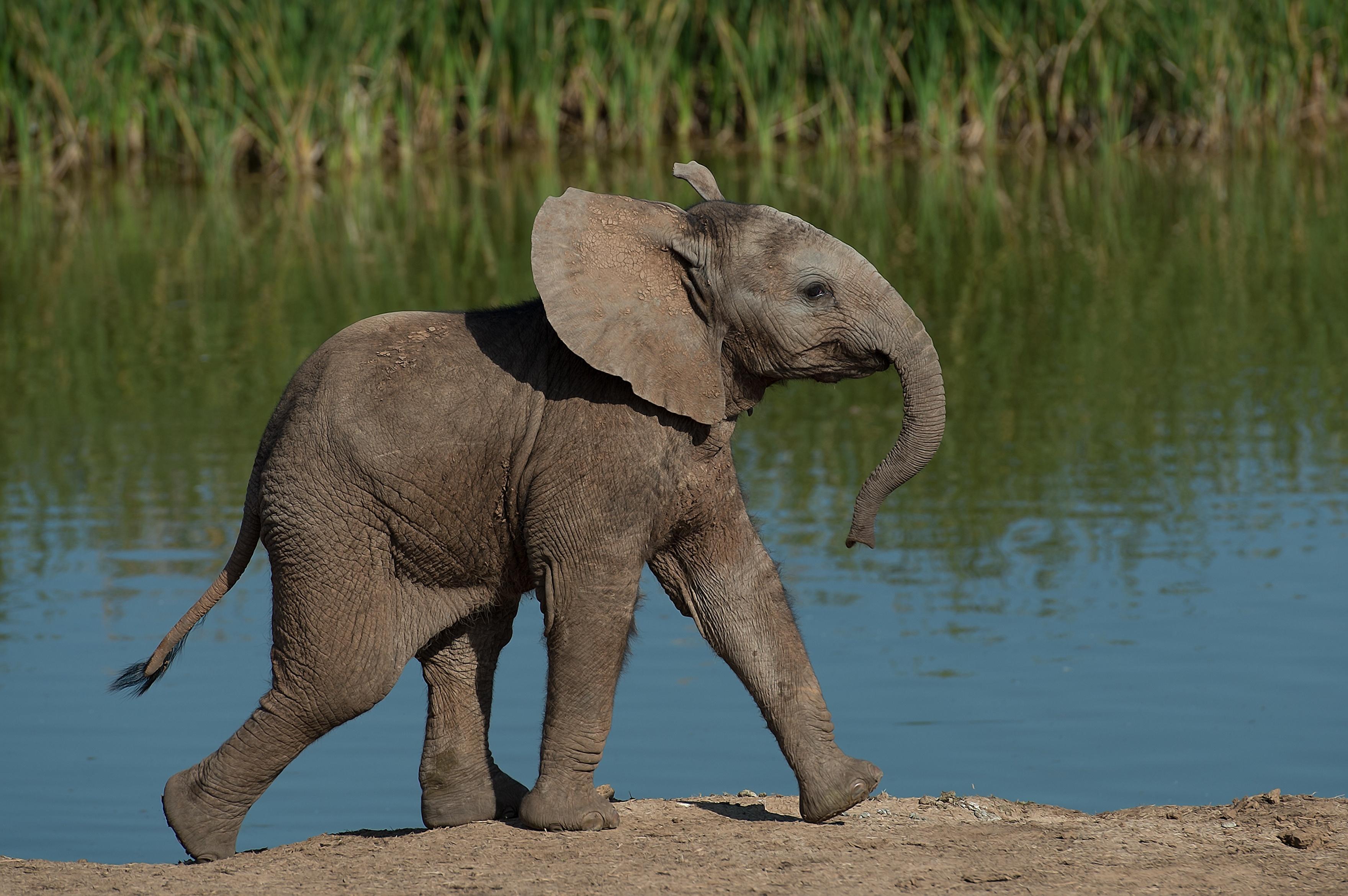 Hadoop_Elephant_DWS17.jpeg